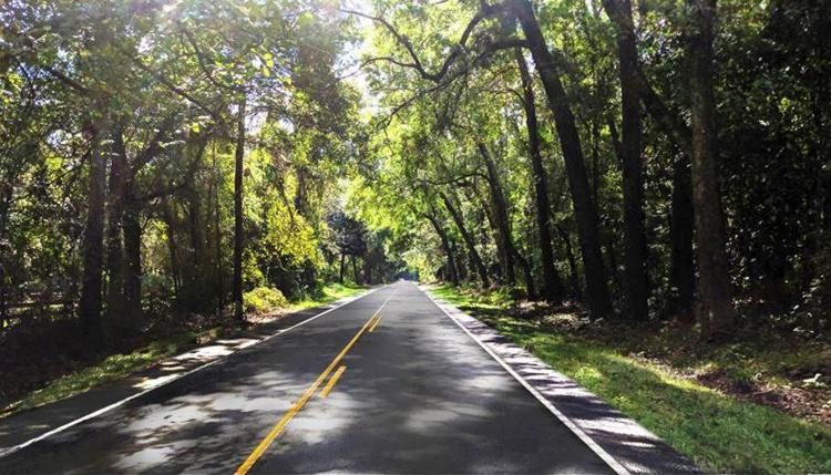 Commentary: Thanks to All Who Helped Make Historic Ashley River Road Safer and Saved the Trees